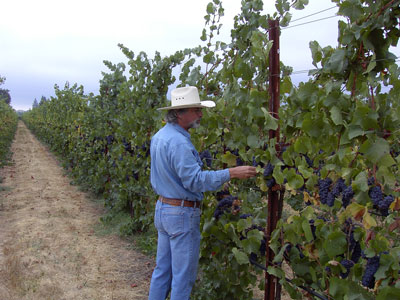 Fred Nunes checking fruit